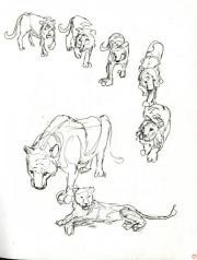 Sketchbook Page - Lions